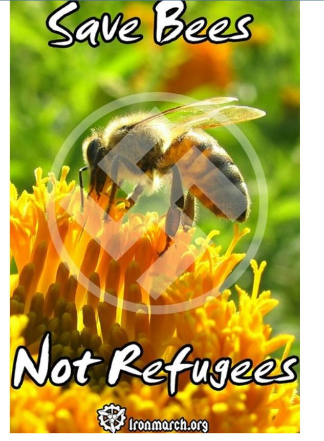 z3b nazi bees2